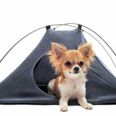 Dog in a camp tent